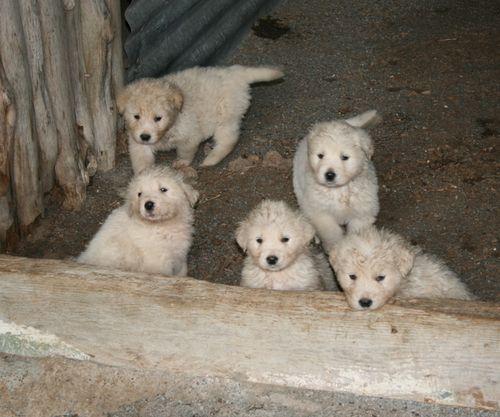 Pups 023