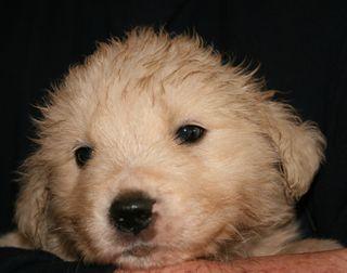 Pups 011