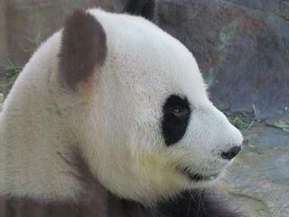 Zoo 046