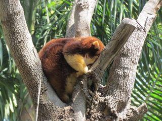 Zoo 091
