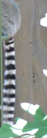 Zoo 088
