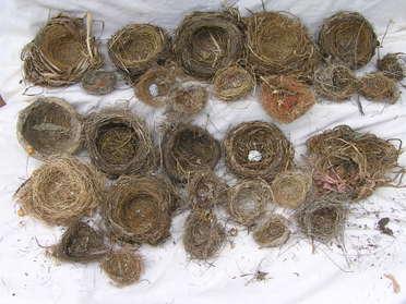 Nests_033