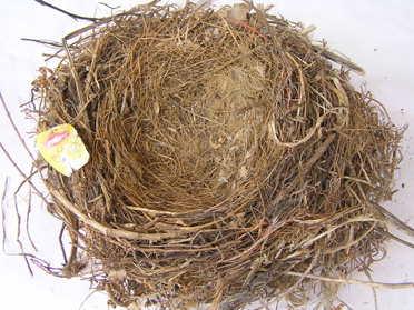 Nests_036